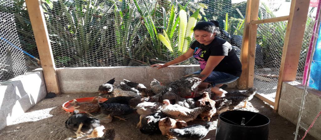 Contribución de la avicultura familiar a la Soberanía Alimentaria y a la equidad de género en El Salvador.